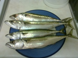 Mackerel on a plate